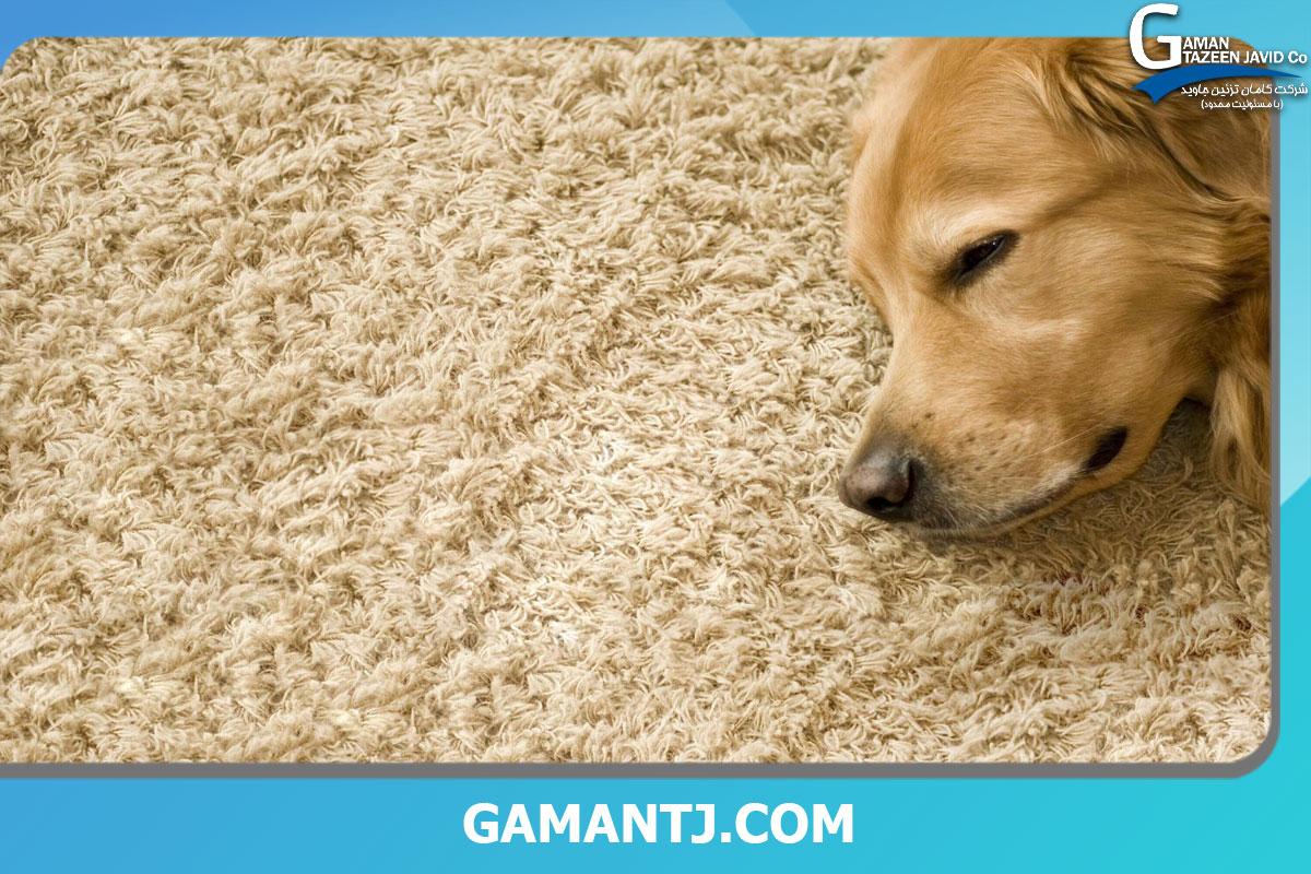 کفپوش مناسب برای حیوانات خانگی