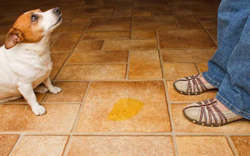 کفپوش مناسب حیوانات خانگی