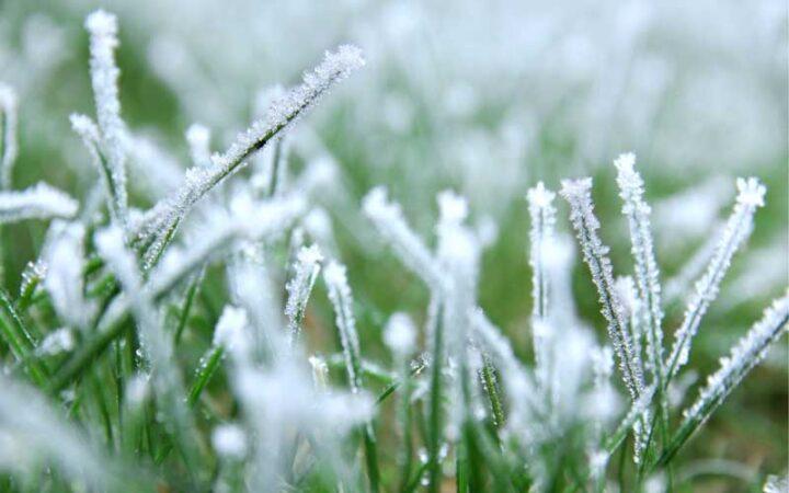 جلوگیری از یخ زدگی چمن مصنوعی