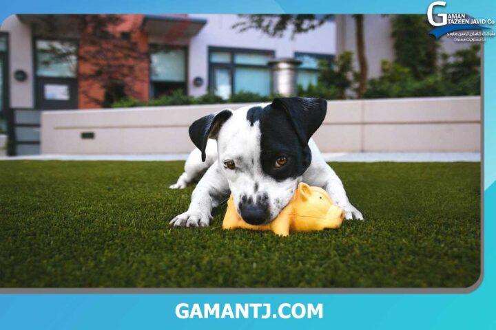 چمن مصنوعی برای سگ ها