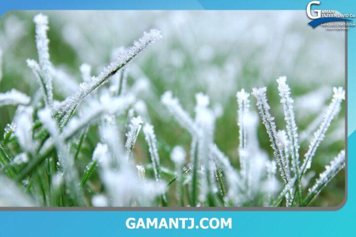 چمن مصنوعی در سرما