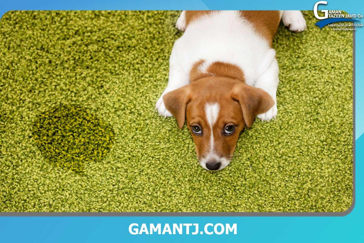 نحوه پاک کردن ادرار سگ از روی چمن مصنوعی